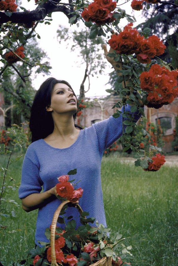 Sophia Loren picks roses at her Italian villa, 1964.