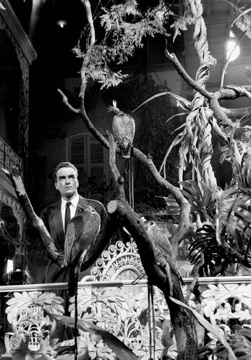 13th_Montgomery Clift on the set of Suddenly, Last Summer (1959, dir. Joseph L. Mankiewicz) photo Burt G