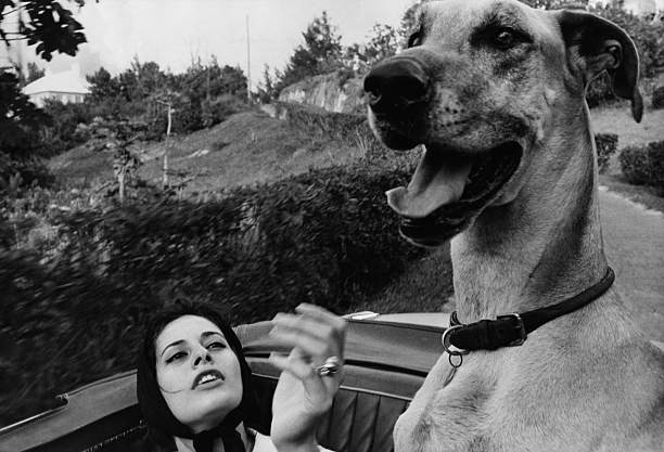Ina Balin With Her Dog, Unknown Photographer, 1960.jpg